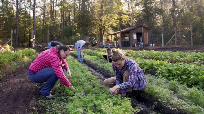 gardening for restaurant produce